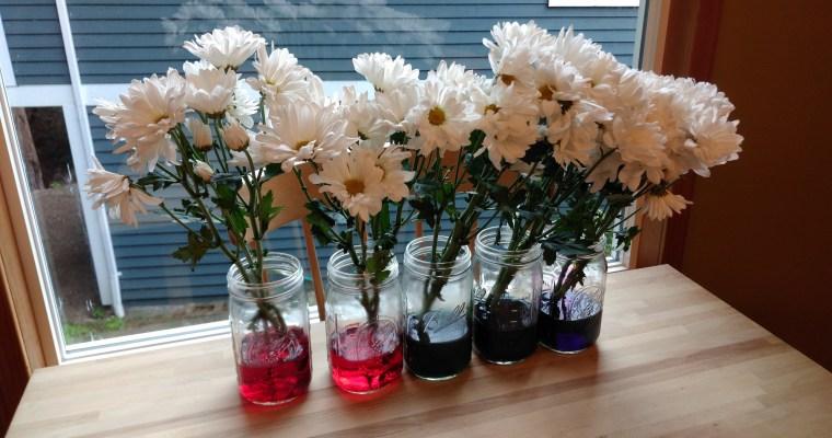 Easy Rainbow Flowers Science Activity