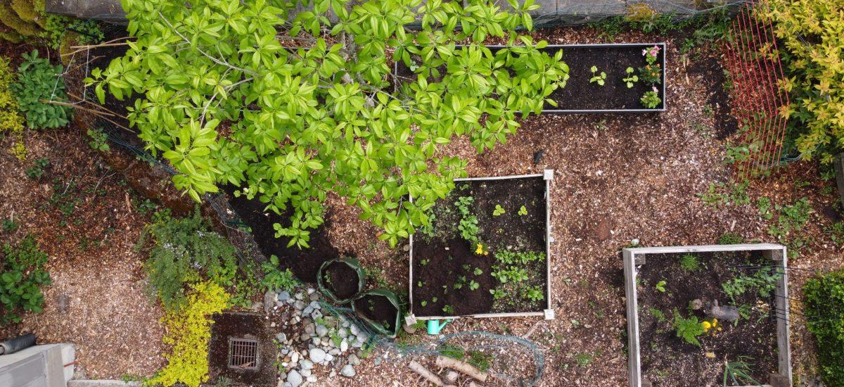 Gardening Update 6.14.2020