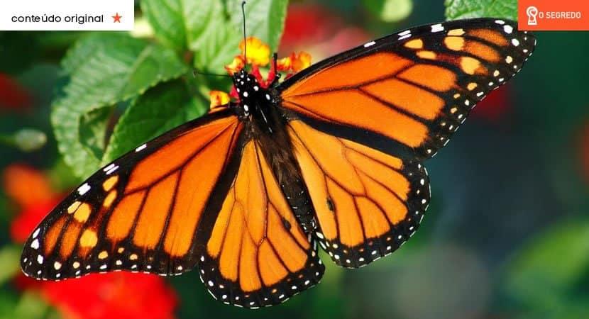 Você sempre encontra borboletas em sua casa? É isso o que elas podem querer lhe dizer!