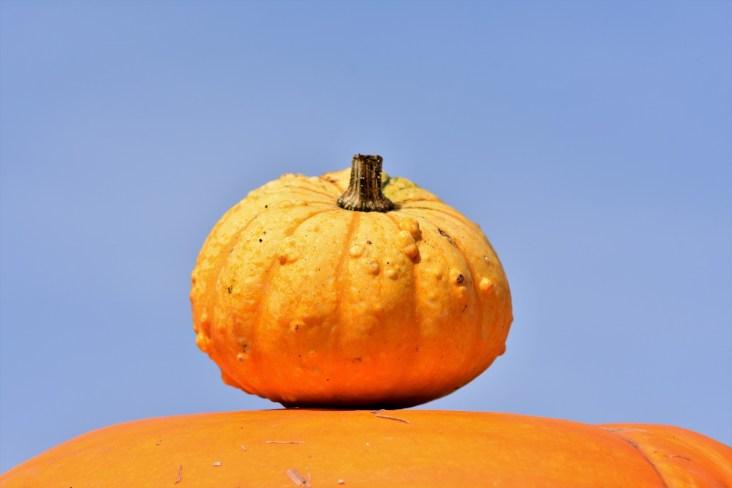 pumpkin-3664579_1920