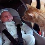 Gato conhece o bebê da família
