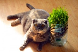 Erva - Fotos de gatos