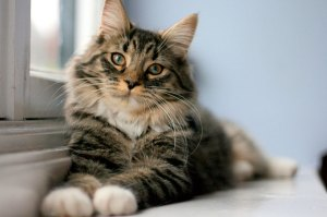 Lindão - Fotos de gatos