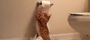 Destruidores de papel higiênico