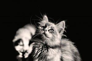 Em preto e branco - Fotos de gatos