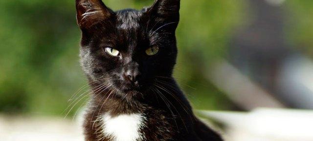 Fotos de gatos pretos - manchado
