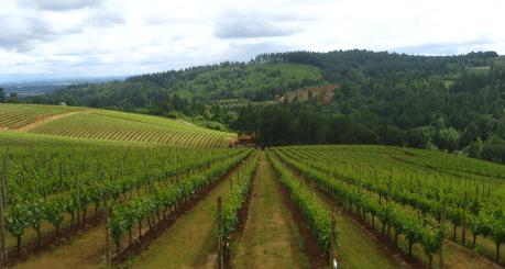 cal-osha-wine-5