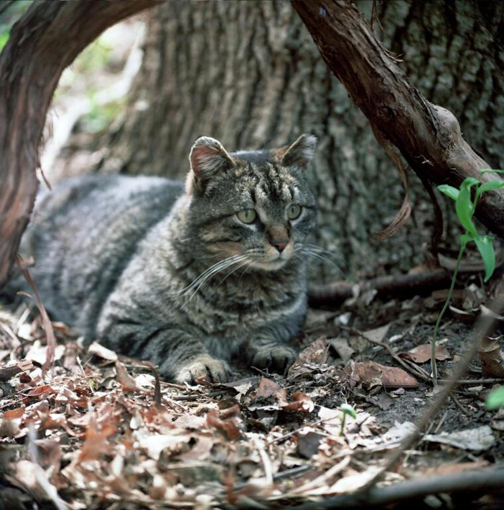 Councillors on the city's development services committee have voted in favour of investigating different ways to handle the city's feral feline population, including starting a possible trap, neuter and release program.