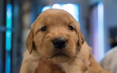 puppies_small-3