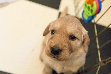 puppies_small2-3