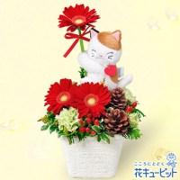 三毛猫のマスコット付きアレンジメント【3,780円】
