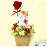 三毛猫のマスコット付きアレンジメント【3,000円+税】511927