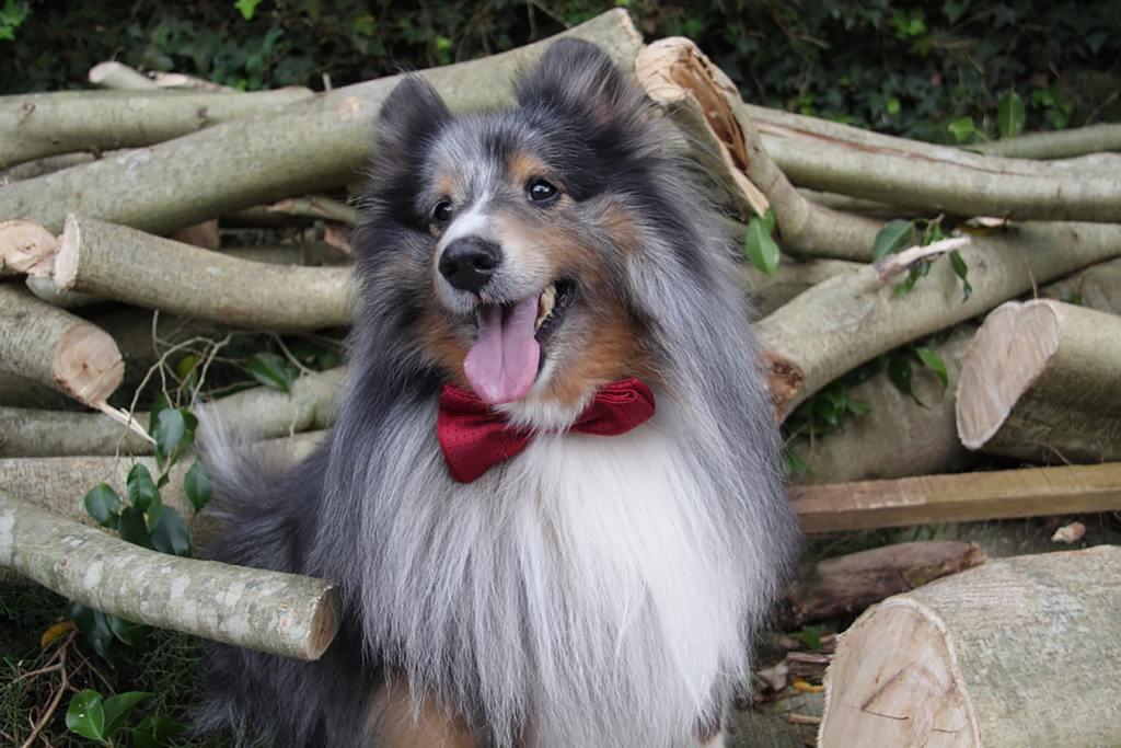 반려동물 패션, 댕댕이 패션 강아지가 리본을 달고 있습니다.  펫 패션 시장의 성장 잠재력이 점점 커지고 있습니다.