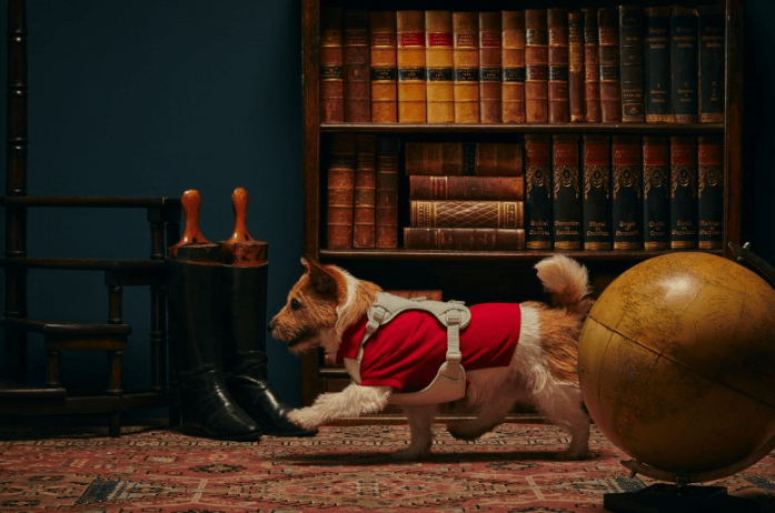 반려동물교감 브랜드 아르르에서는 폴로랄프로렌과 한정판 선물 세트를 선보였습니다.