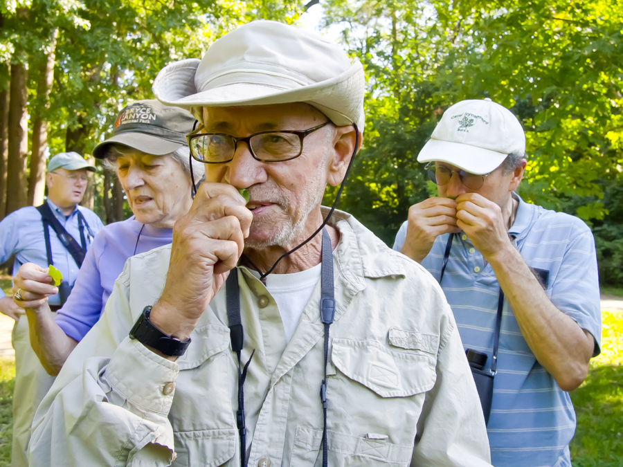 MARJORIE SLAVIN, Harvey Rosenberg, and Matthew Turov take a sniff of wild mint on the Wildflower Walk at Van Cortlandt Park on Sunday.