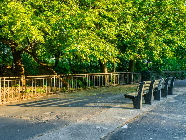 Bronx Park East Bench