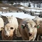 Rancher Relief Fund Winter Storm Atlas OSLHermosa