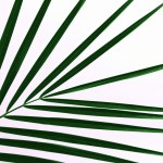 Palm Sunday Service at 10:30am Our Savior's Lutheran Church in Hermosa, SD