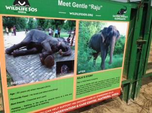Raju the crying elephant
