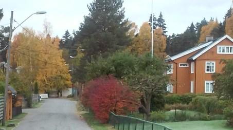 autumn st