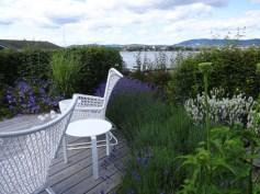 Lavendel hedge