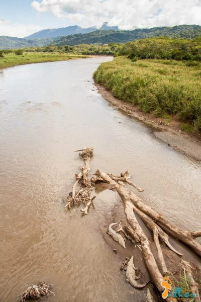 Crocodilos do Rio Tarcoles - Costa Rica-4