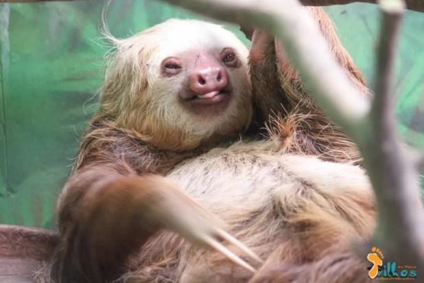 Preguiças-Sloth Sanctuary-Costa Rica-13