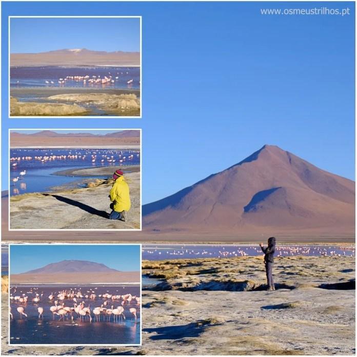 04 - lagunas altiplanicas - bolivia-multi