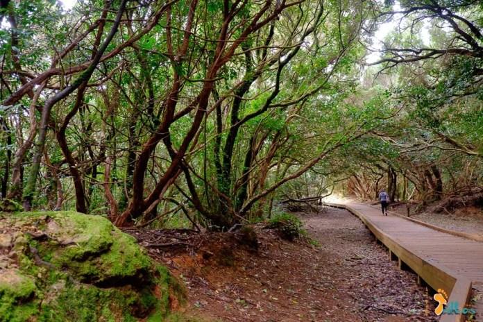 Tenerife.Trekking Anaga.OsMeusTrilhos-1