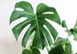 plant unsplash