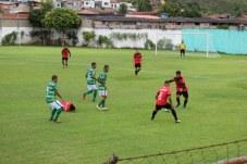 paubrasil (14)