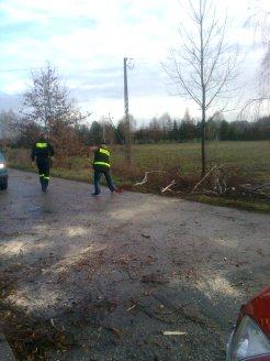 akcja usuwania drzew (2)