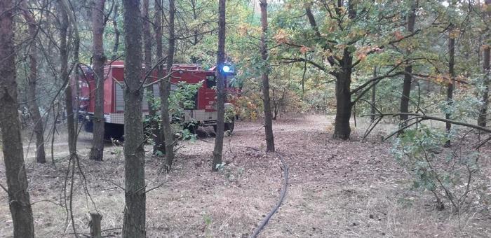 Dogaszenie poszycia leśnego…..