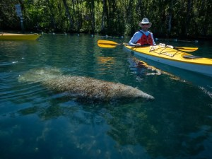 Homosassa River Paddle Trip March 2020 Pictures