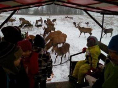zima 2015 oboz terapeutyczny lq safari 400 300 95 - Obóz terapeutyczny zima 2015