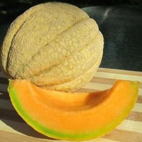 'Dakota Sisters' Muskmelon. Photo: Prairie Road Organic Seeds