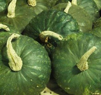 'Dakota Dessert' Squash. Photo: Prairie Road Organic Seeds