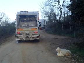 Borgogiglione: rifiuti e agnelli...