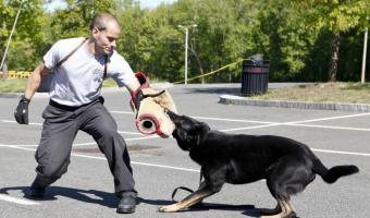 Summer Reading Program ~ Local Canine Unit Heroes Tuesday July 21st @ 10:30 A.M.