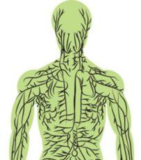 Lymphatic System Detoxification