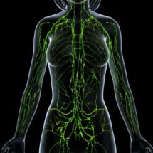 Green Lymphatic System Lady Cropped