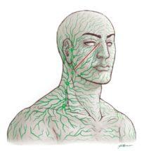 Lymphatic System Detoxification Autism