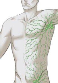 lymphatic system drawing v2 by adbravo - Cropped