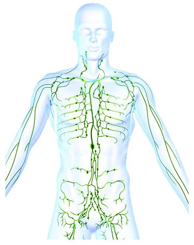 Opening Cisterna Chyli Can Help Celiac, Crohn's, Colitis and IBS