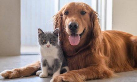 Con estos cinco trucos toma las mejores fotografías a tus mascotas durante la cuarentena