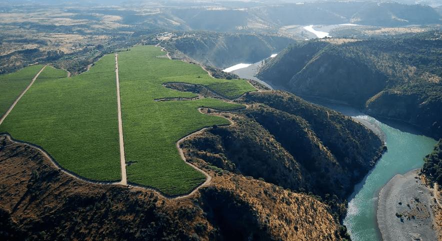 Viñedos que crecen en las riberas chilenas: estos son los atributos y cuidados para lograr vinos que resisten el cambio climático