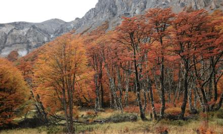 P&G Chile se suma al trabajo de Fundación Reforestemos para ayudar en la conservación de los bosques en la Patagonia