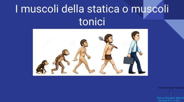 Simonetta Alibrandi Osteopata posturologo i muscoli del corpo