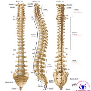 simonetta alibrandi osteopata posturologo roma mal di schiena ernia protrusione postura corretta colonna vertebrale