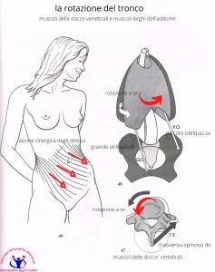 simonetta-alibrandi-osteopata-posturologo-roma-mal-di-schiena-ernia-protrusione-postura-corretta-colonna-vertebrale-lombosciatalgie-muscolatura-addominale-rotazione-del-tronco